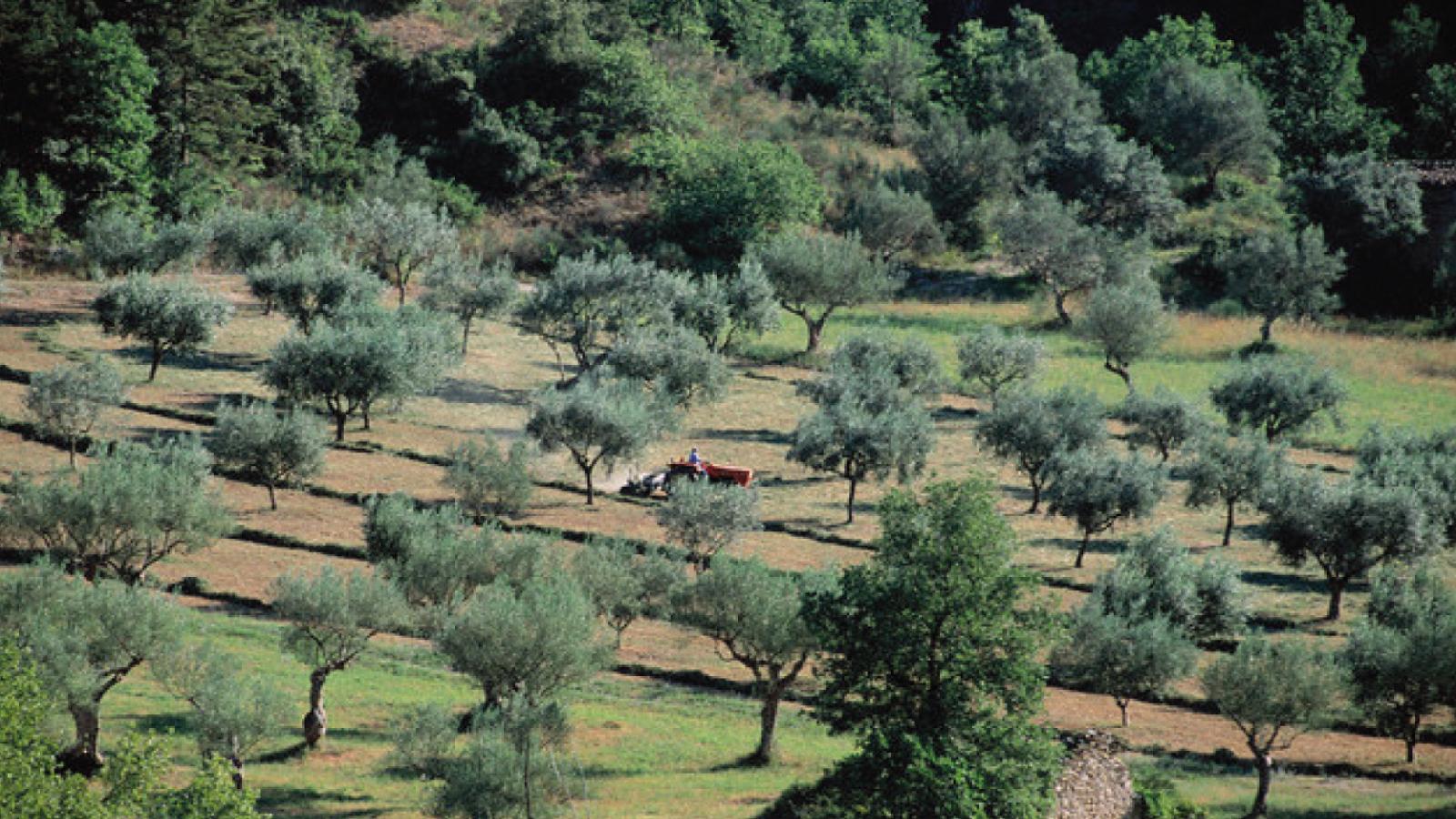 Abruzzo_004